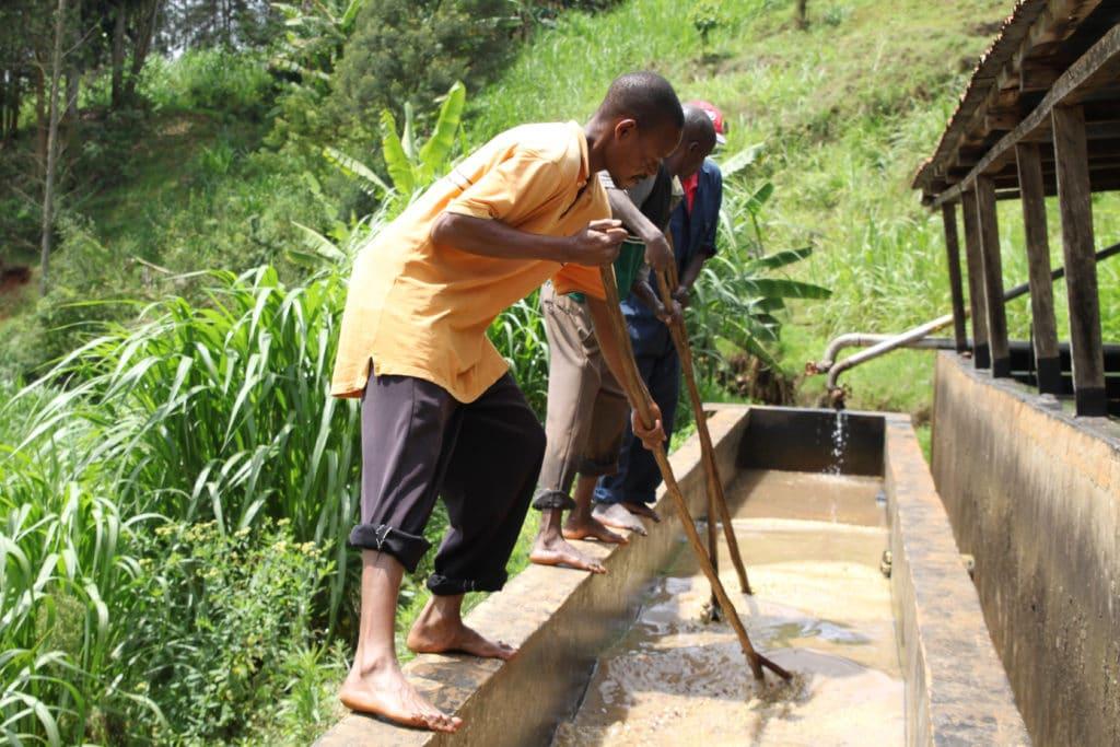 Karogoto Coffee Cooperative Processing