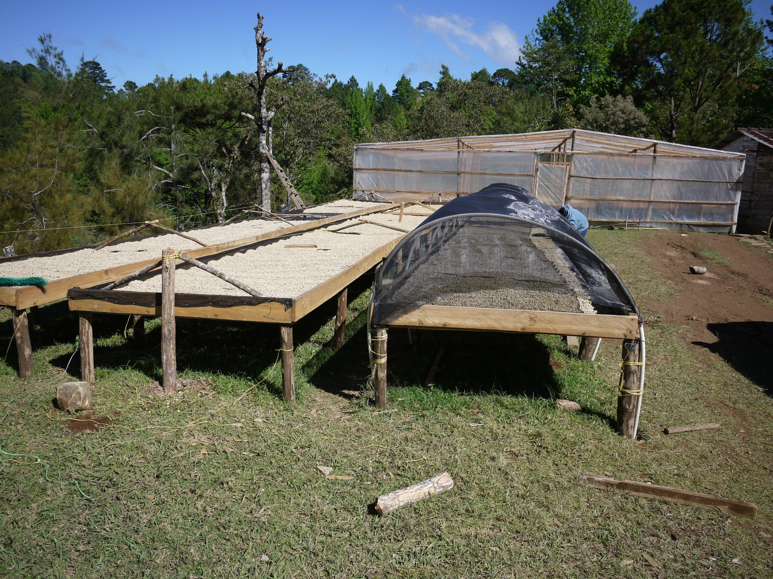 Coffee drying beds