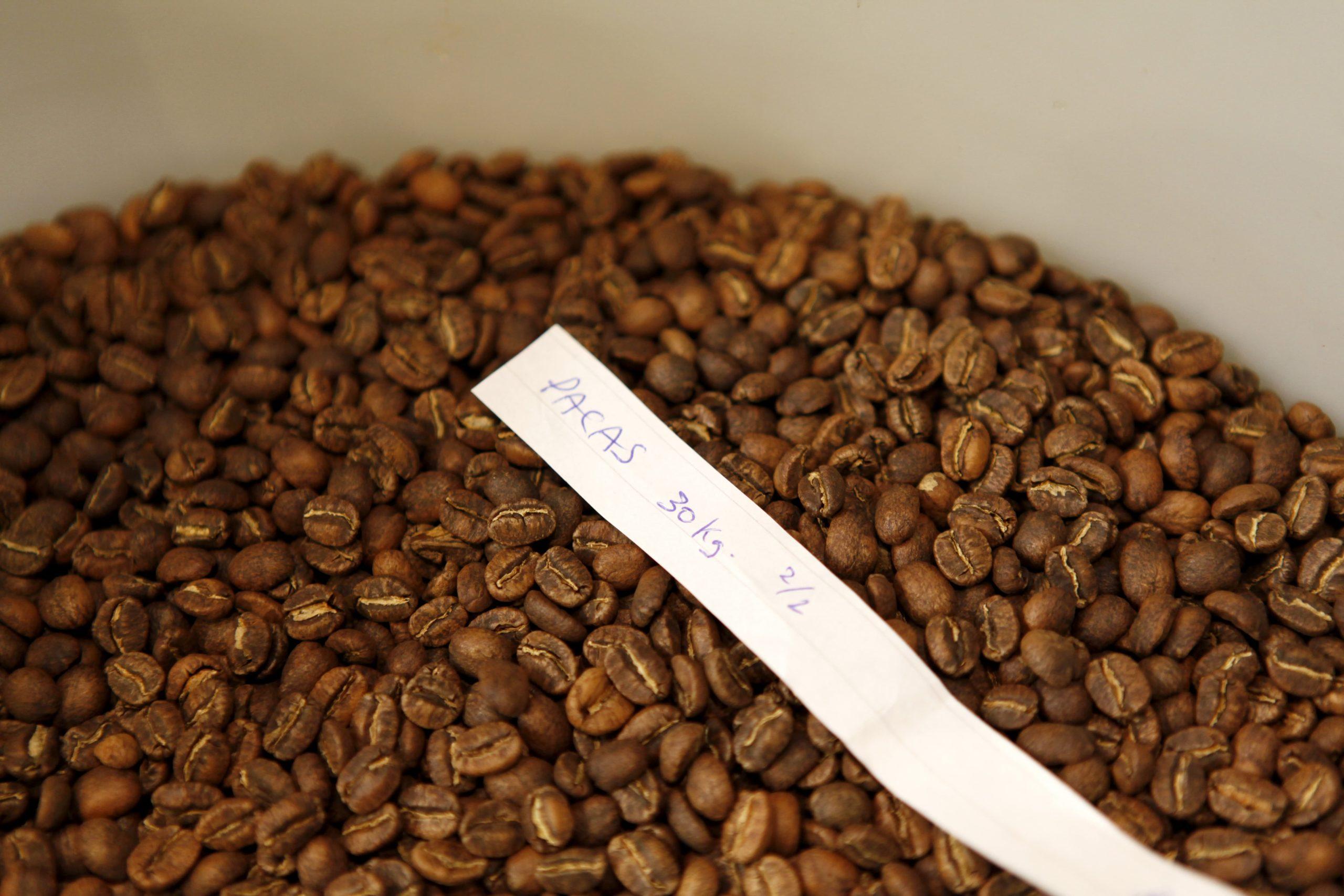 Freshly Roasted Coffee Pacas